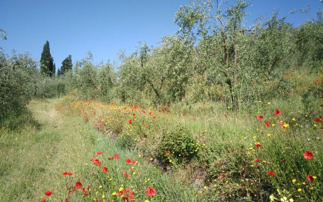 Conoscere e capire la biodiversità