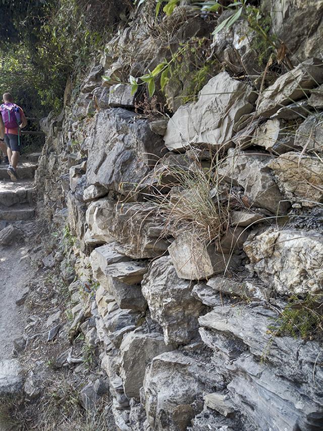I muretti a secco rappresentano un particolare habitat, che ospita piante e animali.