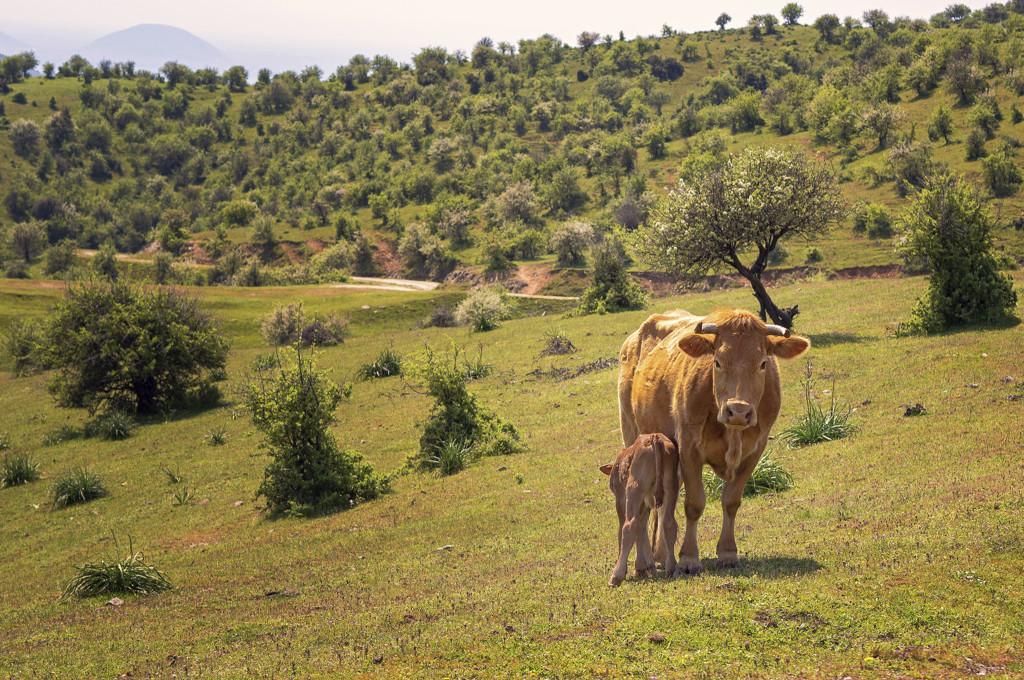 Scegliere di mangiare meno carne, e di animali allevati allo stato brado o semibrado, può avere un positivo impatto sugli equilibri ambientali.