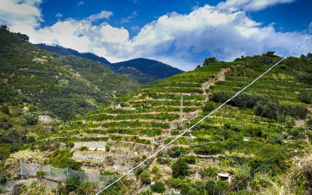 Note sul paesaggio: i muretti a secco | Toscana Fuori Sentiero