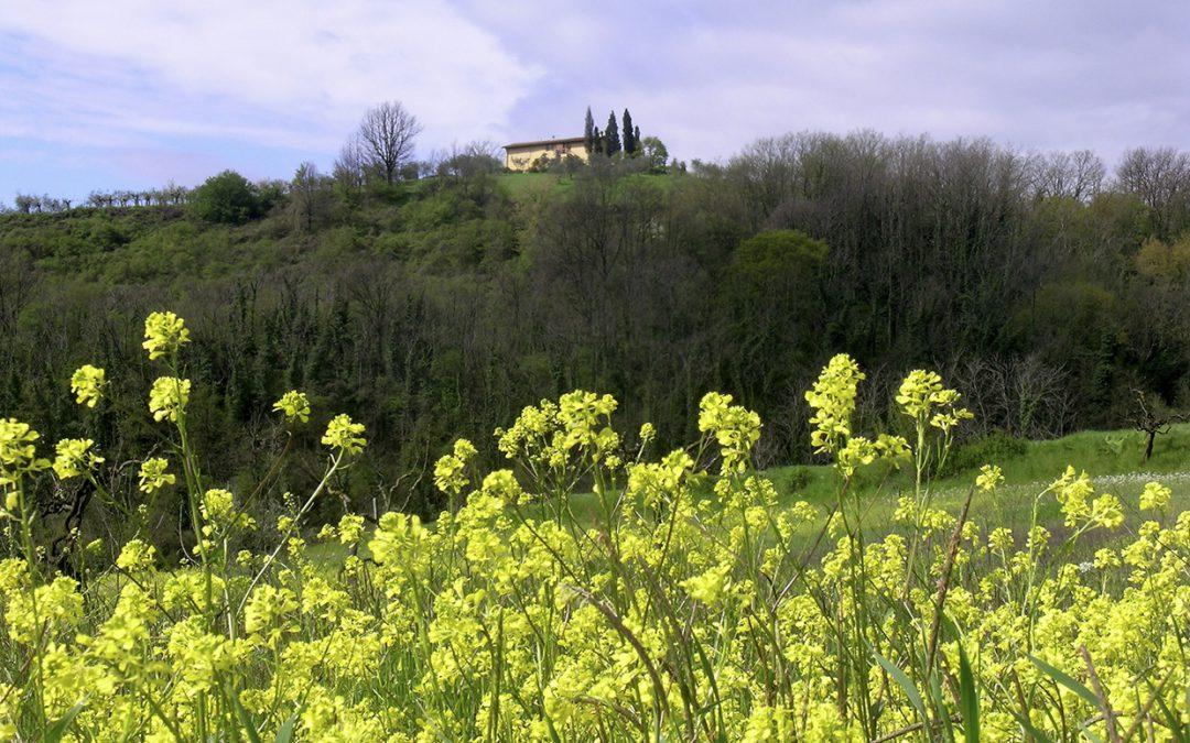 Anello del Rinascimento: da San Donato in Collina a Pontassieve